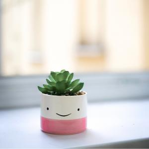 Smiley plant
